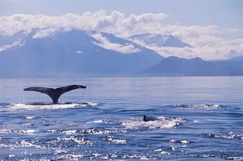 Wale beobachten vor Norwegen