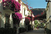Madeira Urlaub - Bougainvilleas