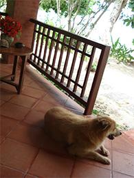Thailand Hotel Hund